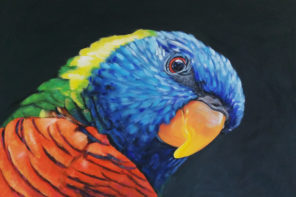 BoW – The Rainbow Lorikeet